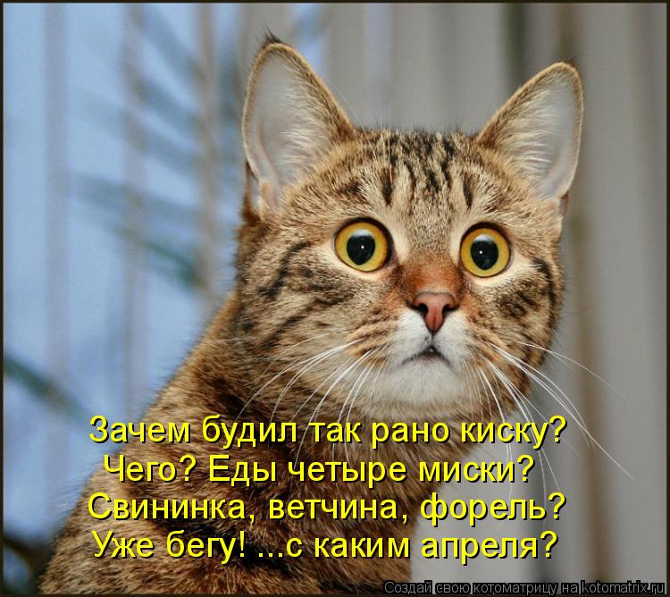 Котоматрица: Зачем будил так рано киску? Чего? Еды четыре миски? Свининка, ветчина, форель? Уже бегу! ...с каким апреля?