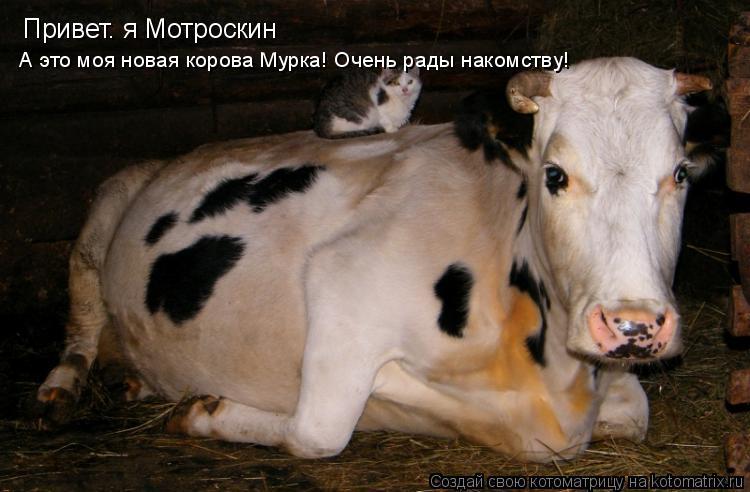 Котоматрица: Привет. я Мотроскин А это моя новая корова Мурка! Очень рады накомству!