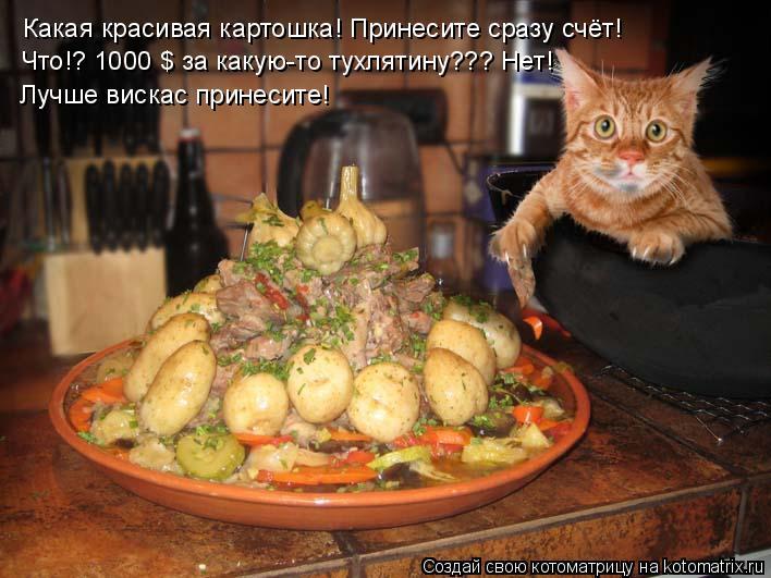 Котоматрица: Какая красивая картошка! Принесите сразу счёт! Что!? 1000 $ за какую-то тухлятину??? Нет! Лучше вискас принесите!