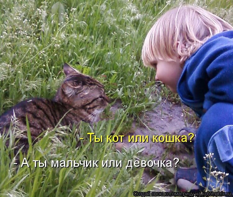 Котоматрица: - А ты мальчик или девочка? - Ты кот или кошка?