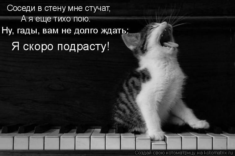 Котоматрица: Соседи в стену мне стучат, А я еще тихо пою. Ну, гады, вам не долго ждать: Я скоро подрасту!