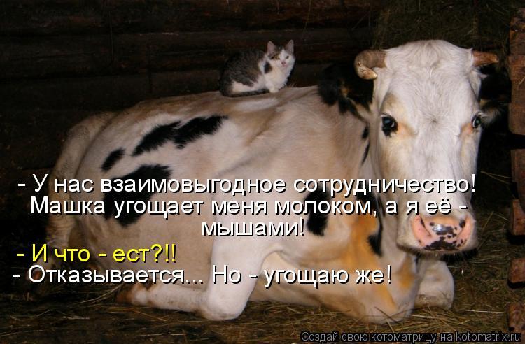 Котоматрица - - У нас взаимовыгодное сотрудничество! Машка угощает меня молоком, а я