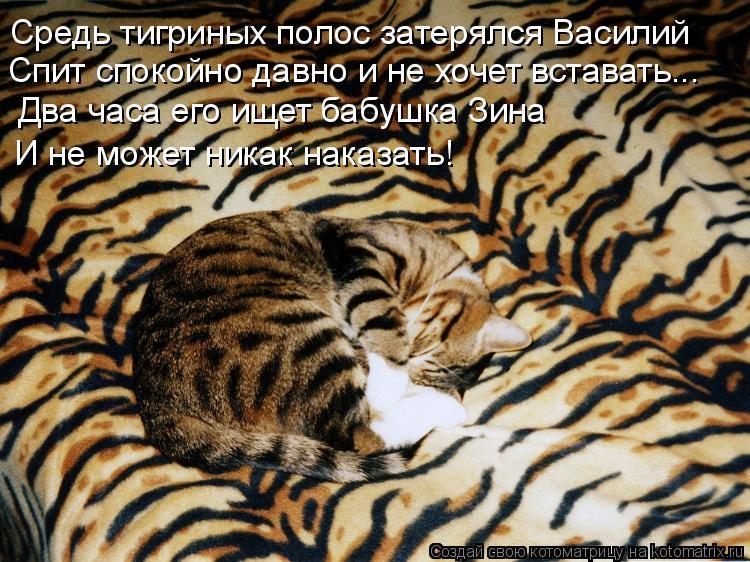 Котоматрица - Средь тигриных полос затерялся Василий Спит спокойно давно и не хочет