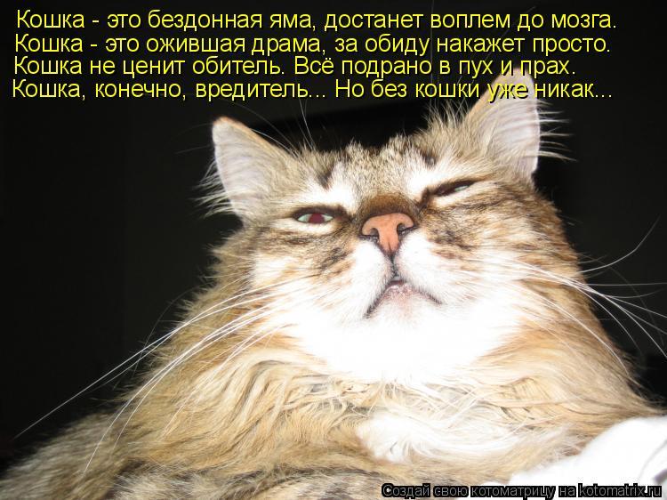 Котоматрица: Кошка - это бездонная яма, достанет воплем до мозга. Кошка - это ожившая драма, за обиду накажет просто. Кошка не ценит обитель. Всё подрано в
