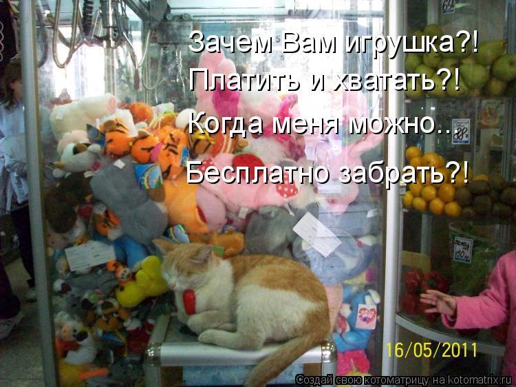 Котоматрица: Зачем Вам игрушка?!  Платить и хватать?! Когда меня можно... Бесплатно забрать?!