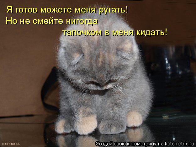 Котоматрица: Я готов можете меня ругать! Но не смейте нигогда тапочком в меня кидать!