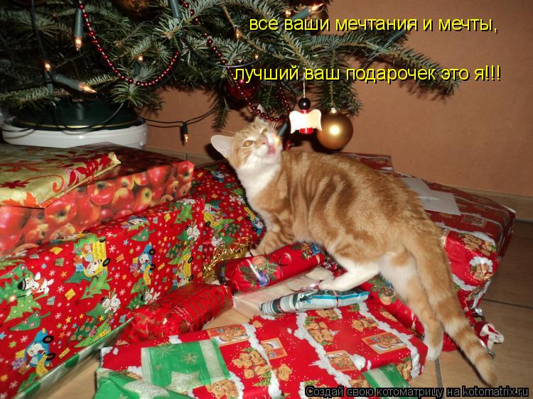 Котоматрица: все ваши мечтания и мечты, лучший ваш подарочек это я!!!