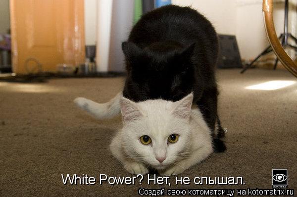 Котоматрица: White Power? Нет, не слышал.