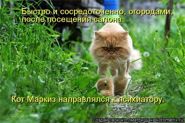 Котоматрица: Быстро и сосредоточенно, огородами, после посещения салона. Кот Маркиз направлялся к психиатору.