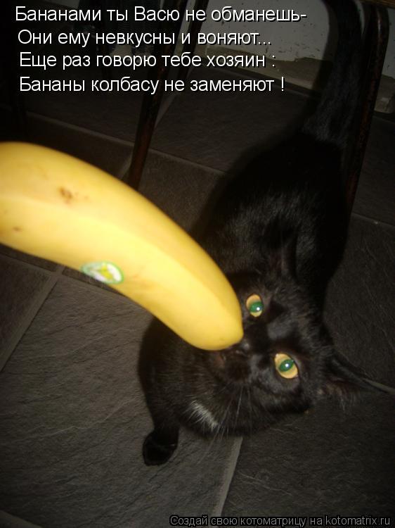 Котоматрица: Бананами ты Васю не обманешь- Они ему невкусны и воняют... Еще раз говорю тебе хозяин : Бананы колбасу не заменяют !