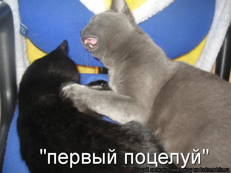 """Котоматрица: """"первый поцелуй"""""""