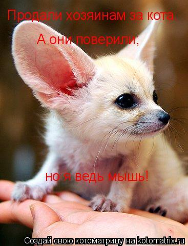 Котоматрица: Продали хозяинам за кота. А они поверили; но я ведь мышь!