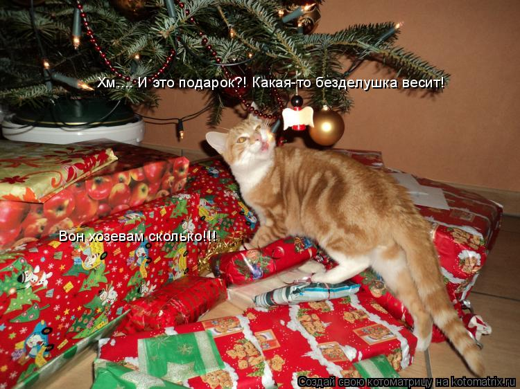 Котоматрица: Хм.... И это подарок?! Какая-то безделушка весит! Вон хозевам сколько!!!