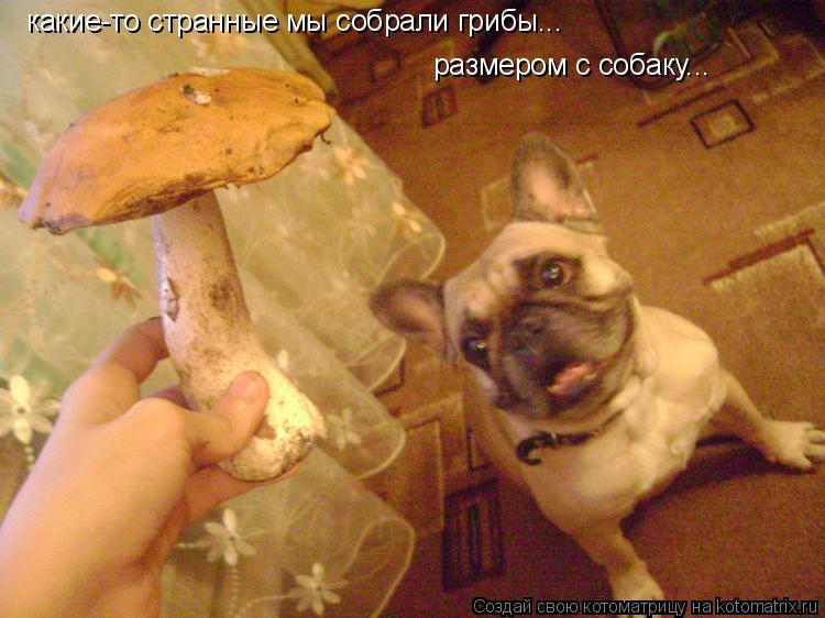 Котоматрица: какие-то странные мы собрали грибы... размером с собаку...