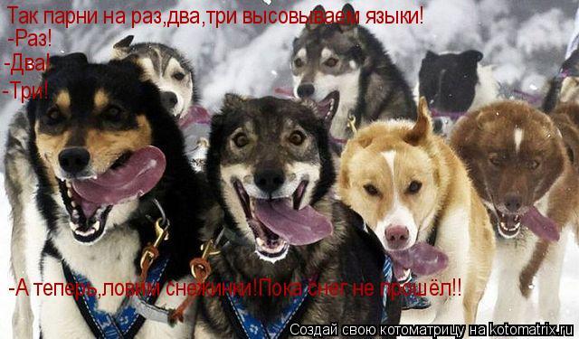 Котоматрица: Так парни на раз,два,три высовываем языки! -Раз! -Два! -Три! -А теперь,ловим снежинки!Пока снег не прошёл!!