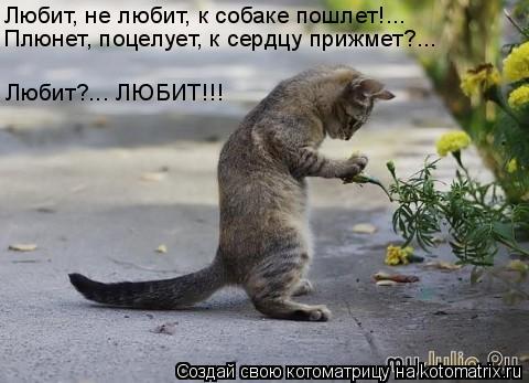 Котоматрица: Любит, не любит, к собаке пошлет!... Плюнет, поцелует, к сердцу прижмет?... Любит?... ЛЮБИТ!!!