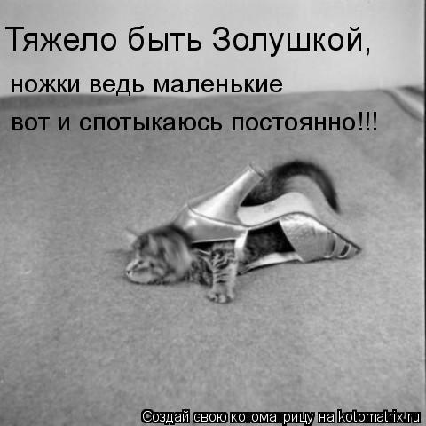 Котоматрица: Тяжело быть Золушкой, ножки ведь маленькие вот и спотыкаюсь постоянно!!!