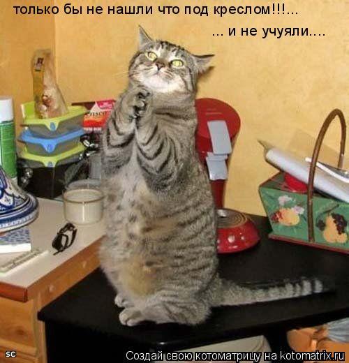 Котоматрица: только бы не нашли что под креслом!!!... ... и не учуяли....