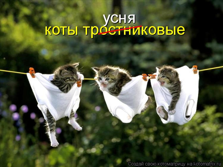 Котоматрица: коты тростниковые _____ усня