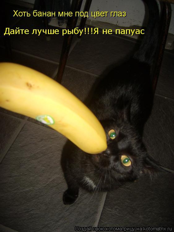 Котоматрица: Хоть банан мне под цвет глаз Дайте лучше рыбу!!!Я не папуас