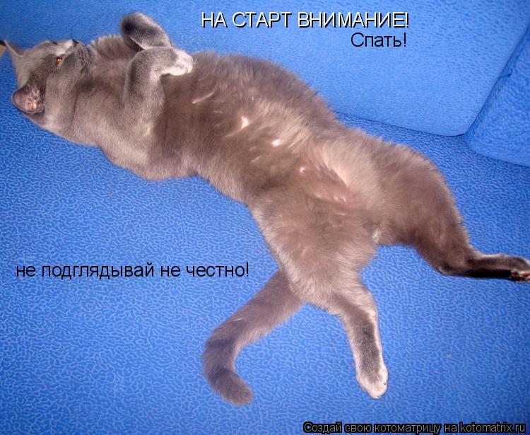 Котоматрица: НА СТАРТ ВНИМАНИЕ! Спать! не подглядывай не честно!