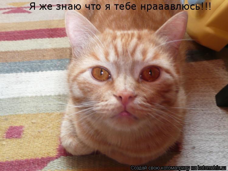 Котоматрица: Я же знаю что я тебе нрааавлюсь!!!