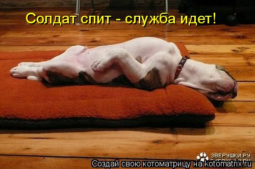 Котоматрица: Солдат спит - служба идет!