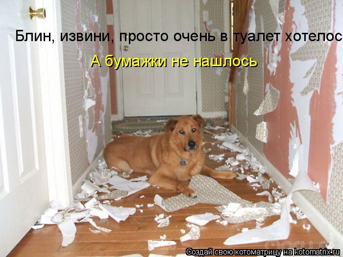 Котоматрица: Блин, извини, просто очень в туалет хотелось А бумажки не нашлось
