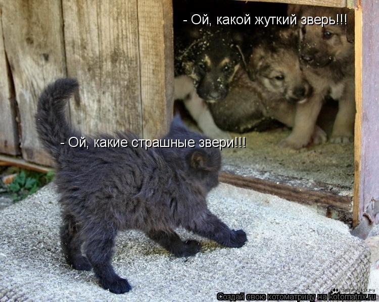 Котоматрица: - Ой, какой жуткий зверь!!! - Ой, какие страшные звери!!!