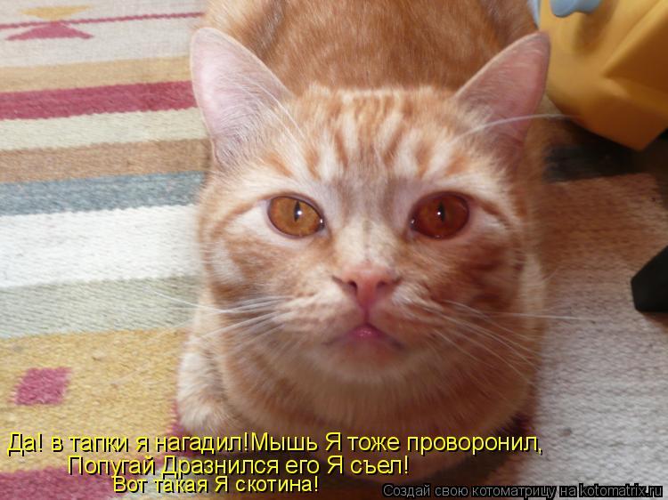 Котоматрица: Да! в тапки я нагадил!Мышь Я тоже проворонил, Попугай Дразнился его Я съел! Вот такая Я скотина!