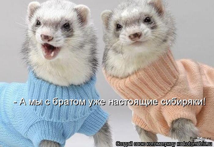 Котоматрица: - А мы с братом уже настоящие сибиряки!