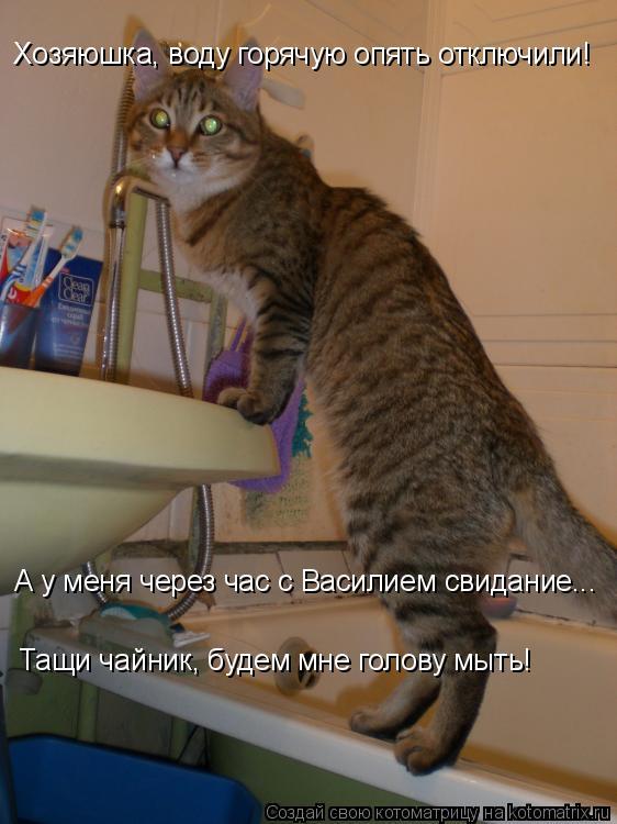 Котоматрица: Хозяюшка, воду горячую опять отключили! А у меня через час с Василием свидание... Тащи чайник, будем мне голову мыть!