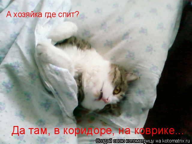 Котоматрица: А хозяйка где спит? Да там, в коридоре, на коврике...