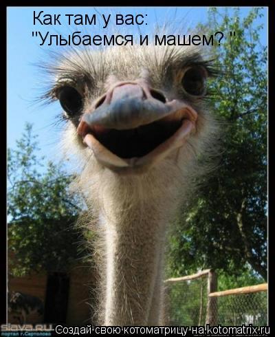 "Котоматрица: Как там у вас: ""Улыбаемся и машем? """