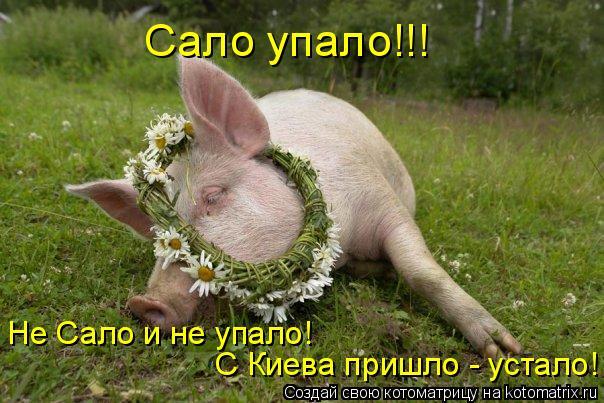 Котоматрица: Сало упало!!! С Киева пришло - устало! Не Сало и не упало!