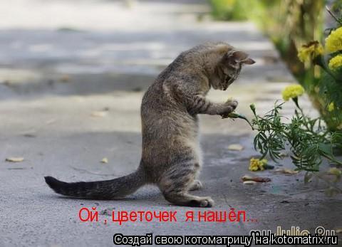 Котоматрица: Ой , цветочек  я нашёл...