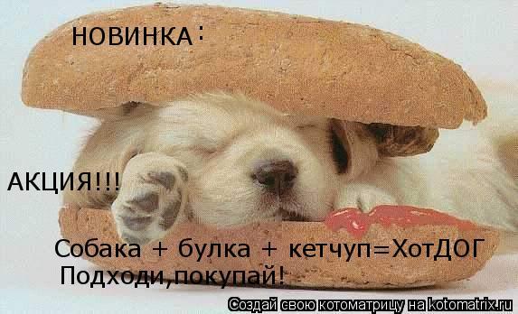 Котоматрица: НОВИНКА Собака + булка + кетчуп=ХотДОГ : Подходи,покупай! АКЦИЯ!!!