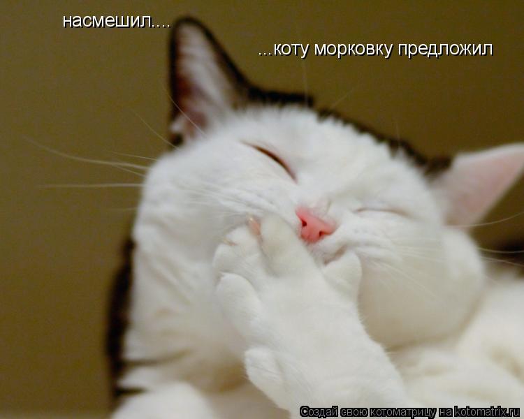 Котоматрица: насмешил.... ...коту морковку предложил