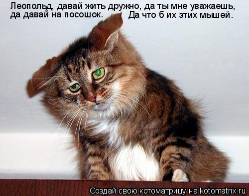 Котоматрица: Леопольд, давай жить дружно, да ты мне уважаешь, да давай на посошок. Да что б их этих мышей.