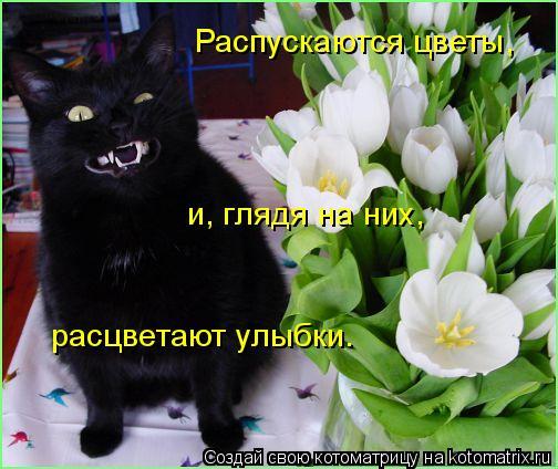 Котоматрица: Распускаются цветы, и, глядя на них, расцветают улыбки.