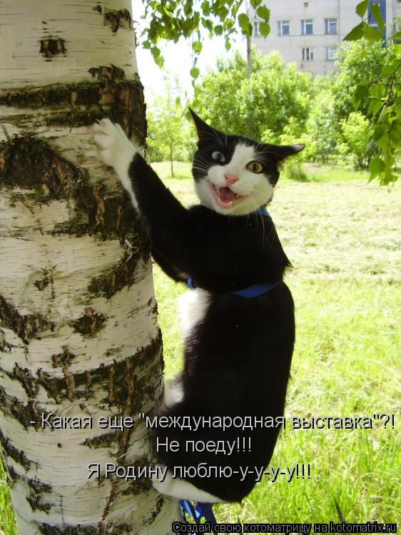 "Котоматрица: - Какая еще ""международная выставка""?! Не поеду!!! Я Родину люблю-у-у-у-у!!!"