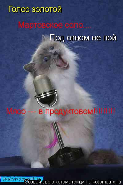 Котоматрица: Голос золотой Под окном не пой Мясо --- в продуктовом!!!!!!!!! Мартовское соло....
