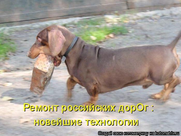 Котоматрица: Ремонт российских дорОг :  новейшие технологии