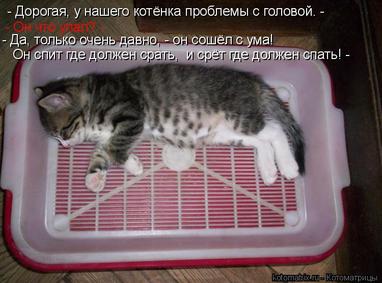 Котоматрица: - Дорогая, у нашего котёнка проблемы с головой. - - Он что упал? - - Да, только очень давно, - он сошёл с ума! Он спит где должен срать,  и срёт где д
