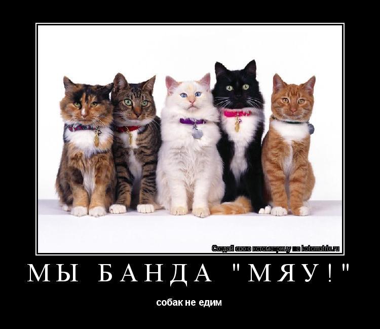 "Котоматрица: Мы банда ""Мяу!"" собак не едим"