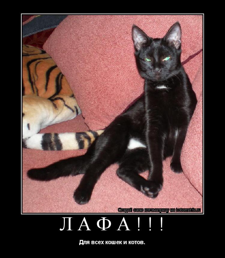 Котоматрица: Лафа!!! Для всех кошек и котов.