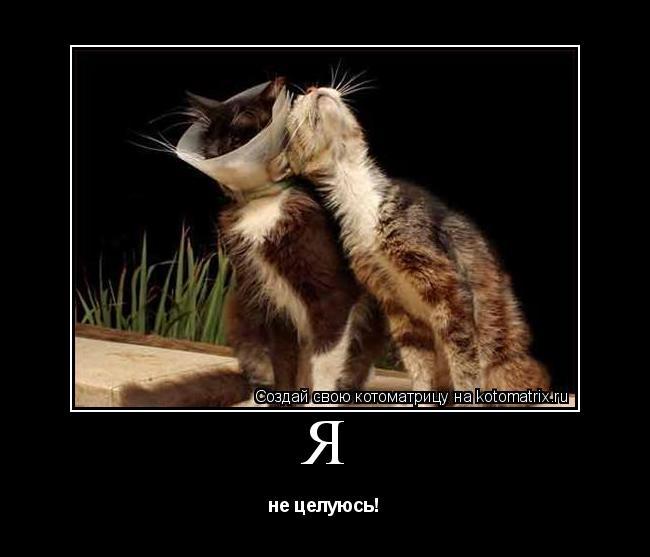 Котоматрица: Я не целуюсь!
