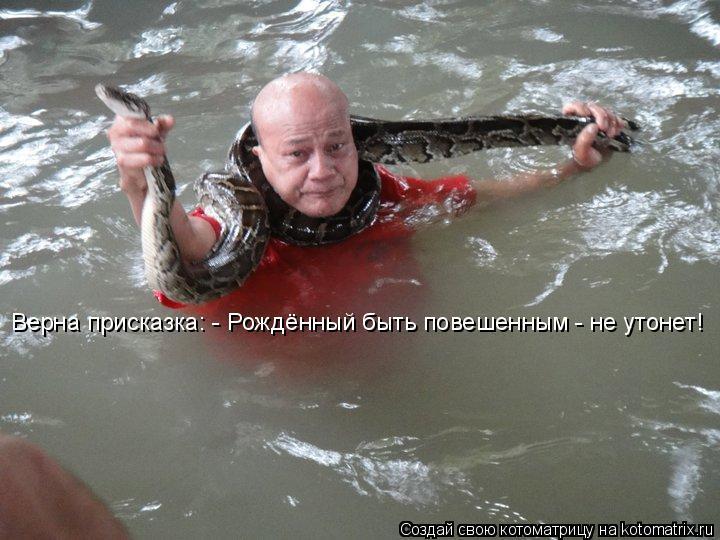 Котоматрица: Верна присказка: - Рождённый быть повешенным - не утонет!
