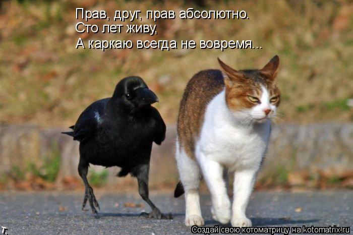 Котоматрица: Прав, друг, прав абсолютно. Сто лет живу, А каркаю всегда не вовремя...