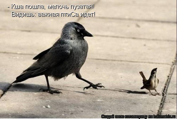 Котоматрица: - Кша пошла, мелочь пузатая! Видишь: важная птиСа идет!